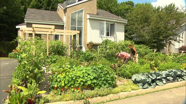 The front yard vegetable garden created by Drummondville couple, Michel Beauchamp and Josée Landry. Photo courtesy of CBC News Montreal.