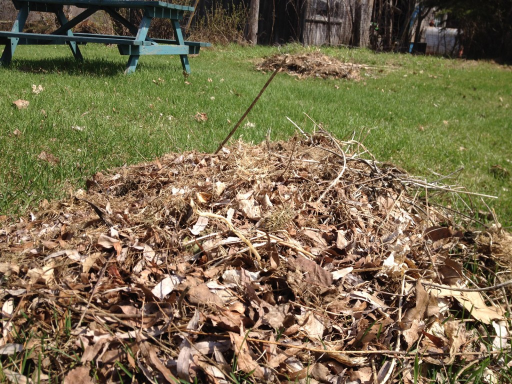 We do remove thick piles of leaves but we're certain not to overdo the cleanup. We always leave some debris on the ground and make sure not to strip the ground bare. A thick covering of leaves will allow the soil to retain the cold winter temperatures. Let the light shine in to warm up the soil.