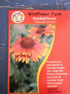Blanket Flower, Gallardia aristata is easy to grow from seed.