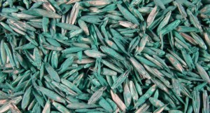 Coated lawn seed