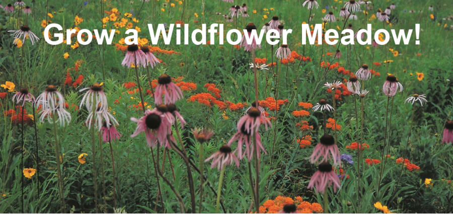 wildflower farm is your source for organically grown non gmo native north american wildflower seeds native grasses and wildflower seed mixes - Wildflower Garden